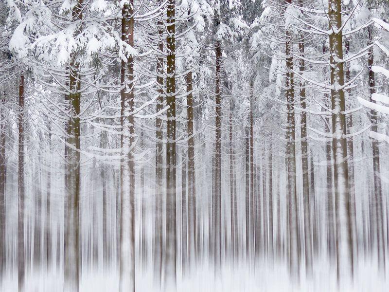 Into the White White Woods van bird bee flower and tree