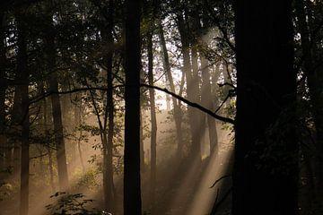 Sonnenstrahlen im Wald von Tania Perneel