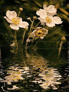 Autumn water - anemoon