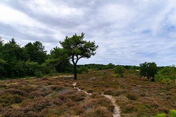 Dunkler Wald von Ingrid Aanen