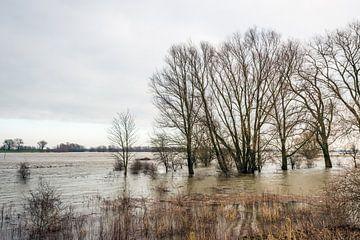 Hoogwater in de Waal bij Poederoijen von Ruud Morijn