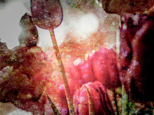 Strange tulips van