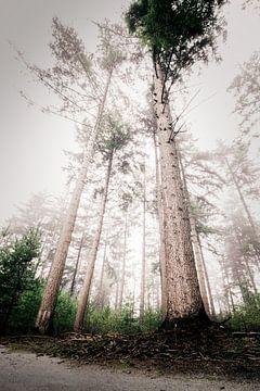 Een mistig dennenbos in Nijverdal van Jaimy Leemburg Photography