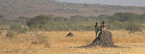 Sitting on termites