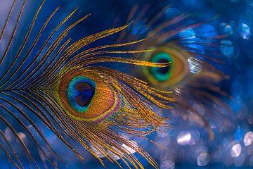 Het aquarium van Rob Bout