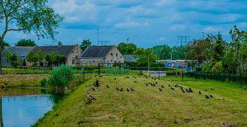 Natuurgebied Moerenburg