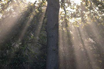 Zonnestralen langs een boom van Kim de Groot