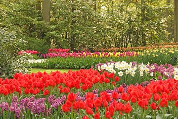Keukenhof serie - bloemenzee van Wilma Overwijn