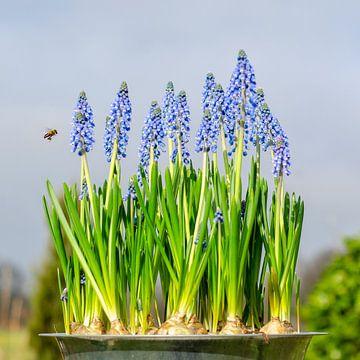 Bosje lente met een blije bij