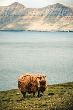 Schafe auf den Färöer-Inseln von Expeditie Aardbol