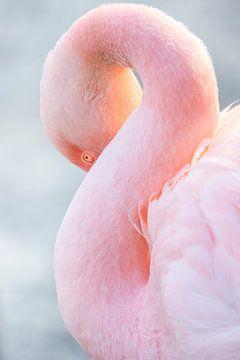 Roze Flamingo van peter reinders