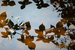 Herfst van Ilona Beekman