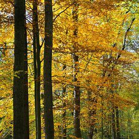 Bomen in herfstkleuren in het Amsterdamse Bos. van Johan Zwarthoed
