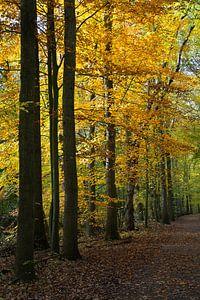 Bomen in herfstkleuren in het Amsterdamse Bos. van
