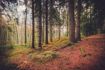 Pins dans la forêt sur Skyze Photography by André Stein