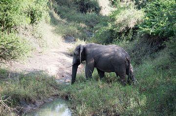 een wilde olifant steekt de rivier over van