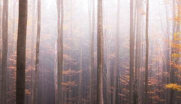 Mystiekbos in de mist van Tobias Luxberg
