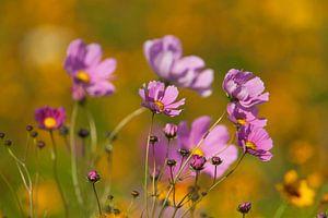 Bloemen in de zomerzon van Ron van Elst
