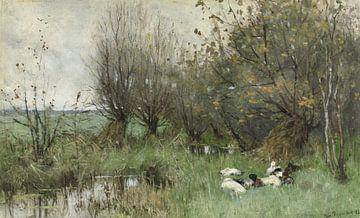 Enten in einem Weidenwald - Geo Poggenbeek