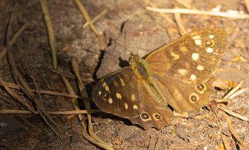 een vlinder in het bos van Js photography