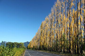 Hoge smalle bomen met geel blad, Chili van A. Hendriks