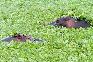 Hippo Salat von Angelika Stern