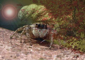 Tarantula von Andreas Schulte