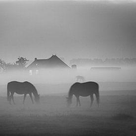 Grazende paarden in de mist bij Dorkwerd (zwart-wit) van Evert Jan Luchies