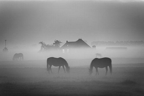 Grazende paarden in de mist bij Dorkwerd (zwart-wit)