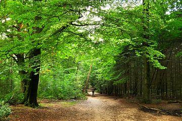 Ein Waldweg mit Wanderer von Corinne Welp
