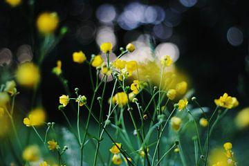 Butterblumen von Alyssa van Niekerk