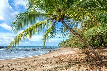 Strand im NP Corcovado in Costa Rica von Corno van den Berg