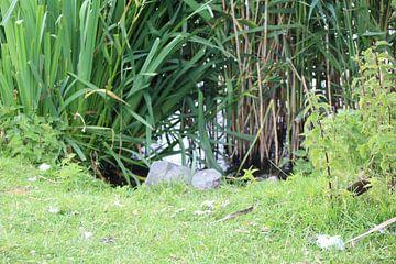 beekje omring door  grassen van Danielle Vd wegen