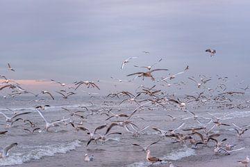 Möwen über der Küste von Remco-Daniël Gielen Photography