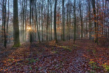 Sonnenstern verzaubert den Wald von Uwe Ulrich Grün