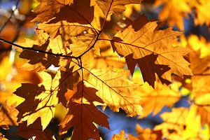 Herfstbladeren in het bos van