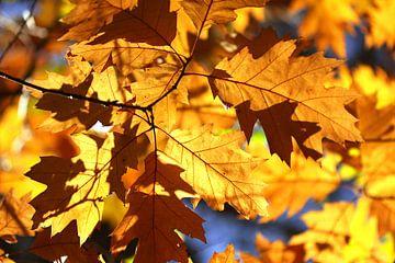 Herfstbladeren in het bos von Jesse de Boom