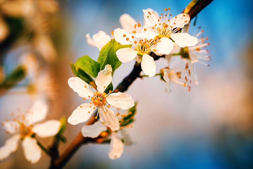 Spring in Berlin van Alexander Voss