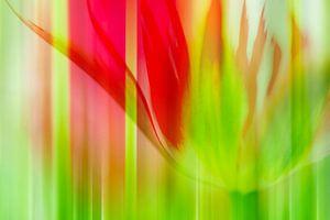 Tulp (Abstractie)
