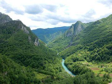 Montenegro van