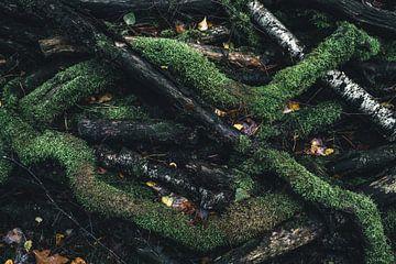 Herbst von Colin van Wijk