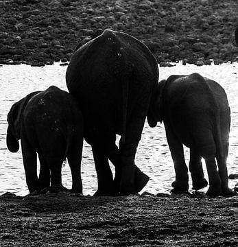 Familie van olifanten van Marit van de Klok