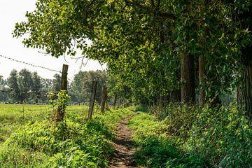 Smal wandelpad tussen de bomen en weilanden. van Mickéle Godderis