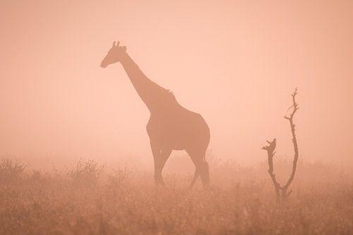 Silhouet van een giraf in de ochtendmist