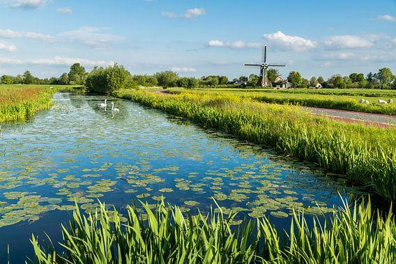 Polderlandschap met zwanen en molen