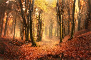 Old trees von Elly Besselink