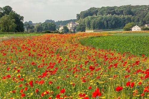 Veldboeket langs de weg naar Château Neercanne van