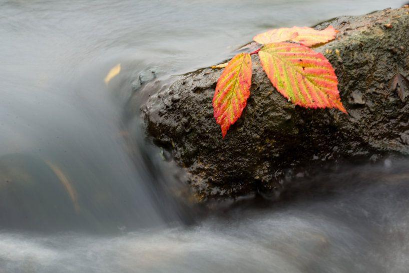 Herfstkleuren van Patrick Brouwers
