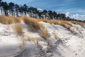 Dünen am Strand von Zingst im Winter