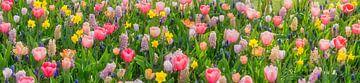 Panorama de la splendeur florale au jardin de fleurs Keukenhof